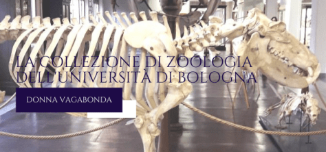 la Collezione di Zoologia dell'Università di Bologna