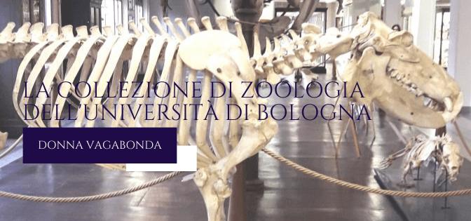 Il Museo del mese di Febbraio: la Collezione di Zoologia dell'Università di Bologna