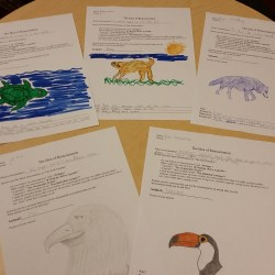 My students' reincarnation sheets! It was fun to see their drawing skills and what animal they would be!
