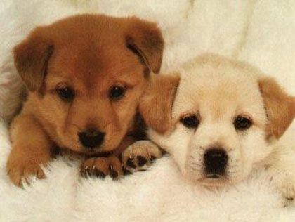 Site de Adoção de Animais Fotos Site de Adoção de Animais – Fotos