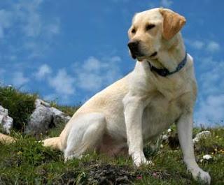 Conheça o Site Tudo Sobre Cachorros Conheça o Site Tudo Sobre Cachorros