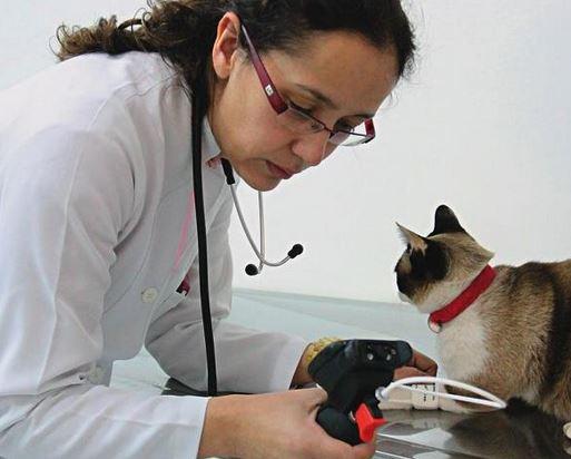 Hospital Veterinário em São Paulo Hospital Veterinário em São Paulo