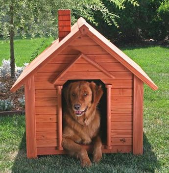 A Melhor Casinha Para Cachorro Modelos de casinha para cachorro