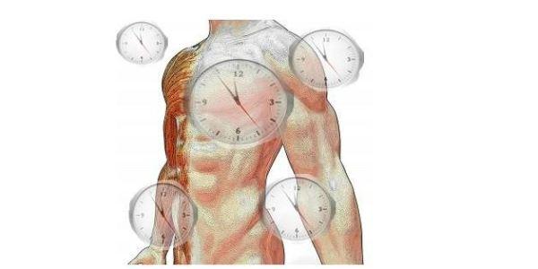 Fazer teste do meu relógio biológico - Diurna, Vespertina ou Noturna