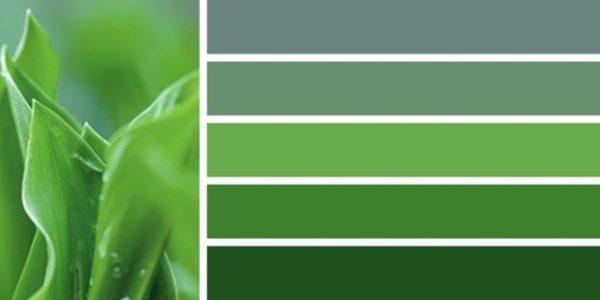 Что означает зеленый цвет: психология - Саморазвитие