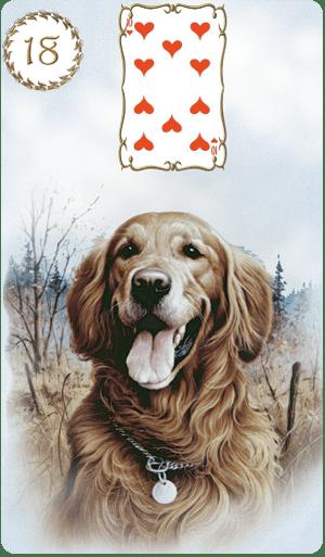 tarot on line o cachorro