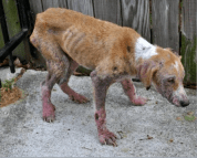 Abused-animals-after-some-love-01-Before-634x511