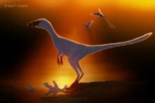 Sinocalliopteryx_Csotonyi_01_07wm
