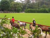 The Singapore Polo Club - a green oasis in the city