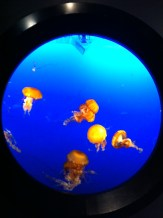 Jellyfish at Vancouver Aquarium
