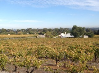 The Penfold's Magill Vineyard with the Adelaide skyline in the background.
