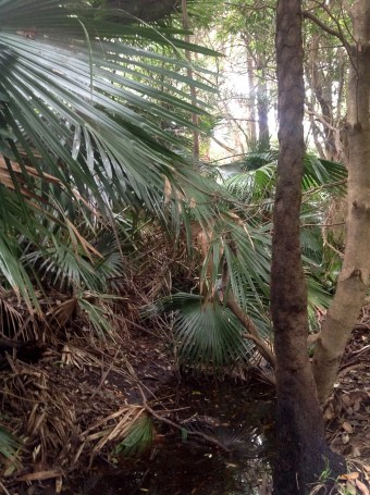 Bushland at the creek where Capt James Cook landed at Botany Bay in 1770.