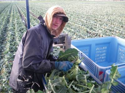 Jonny Blair lives a lifestyle of travel - he worked on the world's first broccoli harvester