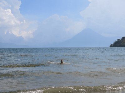 In for a swim on Lago Atitlan.