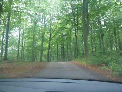 Driving through the forested roads to Ladonia