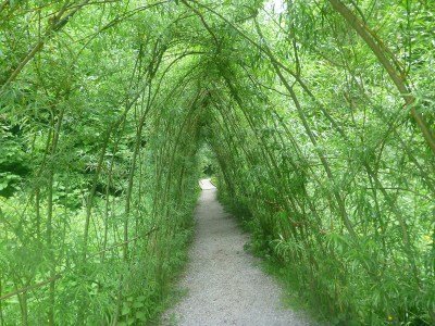 Paths at Blarney Castle and Gardens