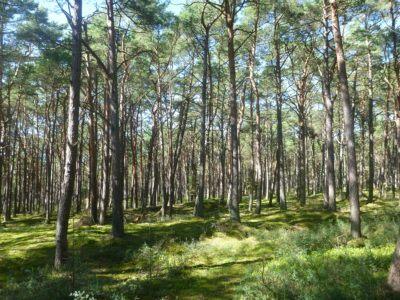 The Forest at Słowiński National Park