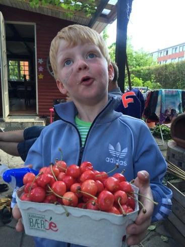 Så er der kirsebær fra haven