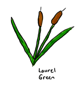 a drawing of a bulrush