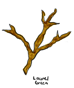 a drawing of a branch