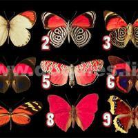 Scegli una farfalla per scoprire quali pensieri nasconde il tuo subconscio