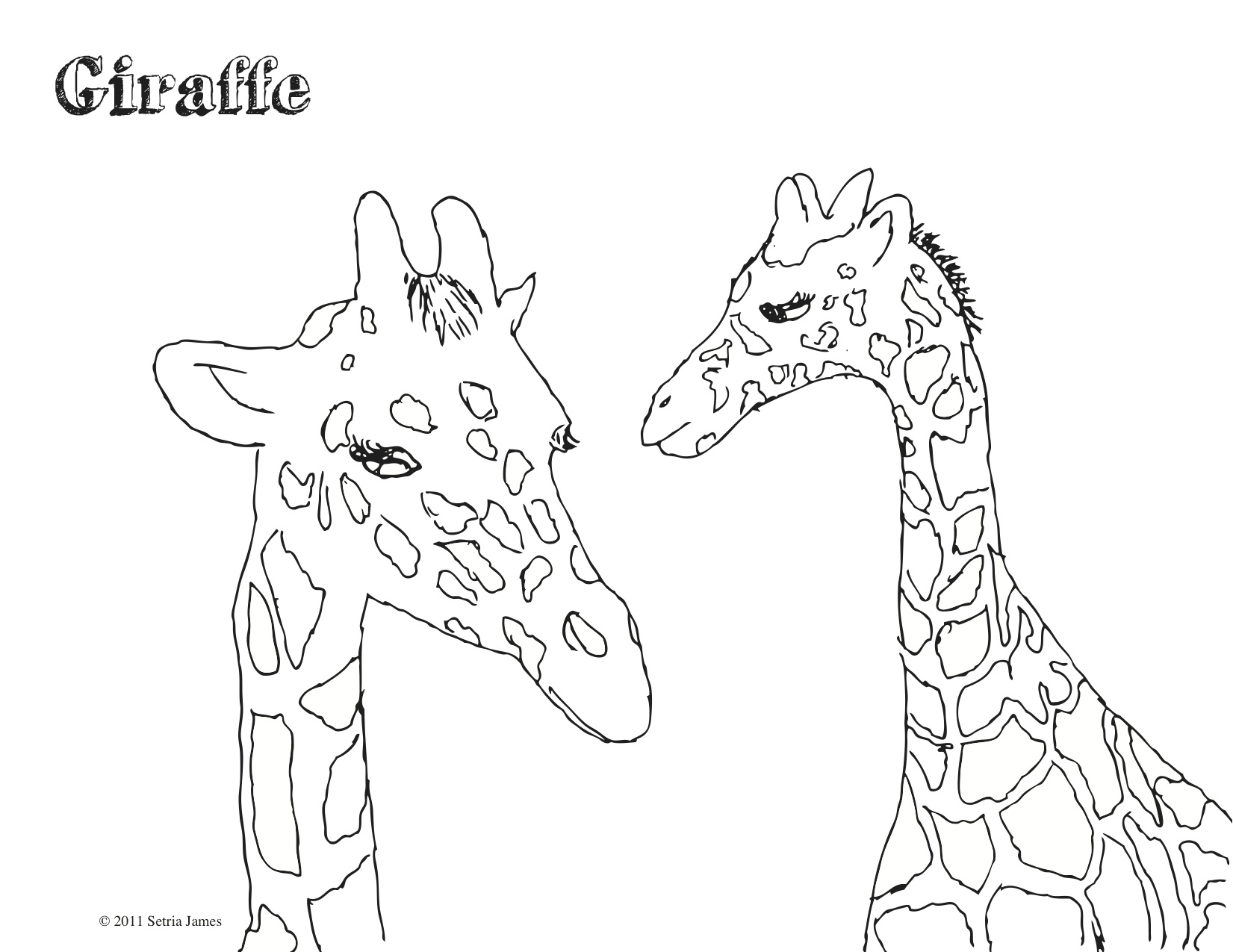 Images About Giraffes On Pinterest