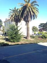 sanfran-palmtrees