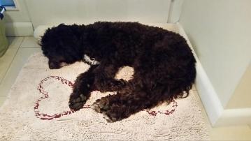 Baloo auf der Dirty Doormat