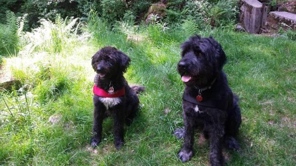 Lennox rechts und Yulee links