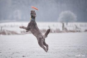 Frisbee spielen geht auch im Schnee.