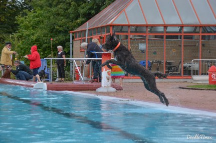 DoodleTimes Hundeschwimmen-18