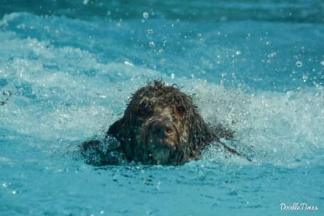 DoodleTimes Hundeschwimmen-5