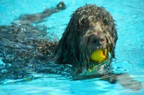 DoodleTimes Hundeschwimmen-6