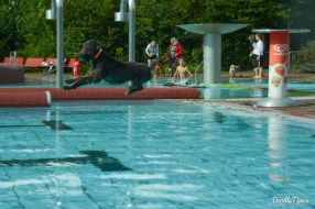 DoodleTimes Hundeschwimmen-7