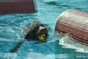 DoodleTimes Hundeschwimmen-8