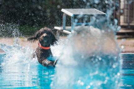 DoodleTimes Hundeschwimmen in Neustadt-13
