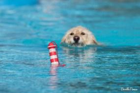 DoodleTimes Hundeschwimmen in Neustadt-17