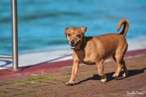 DoodleTimes Hundeschwimmen in Neustadt-28