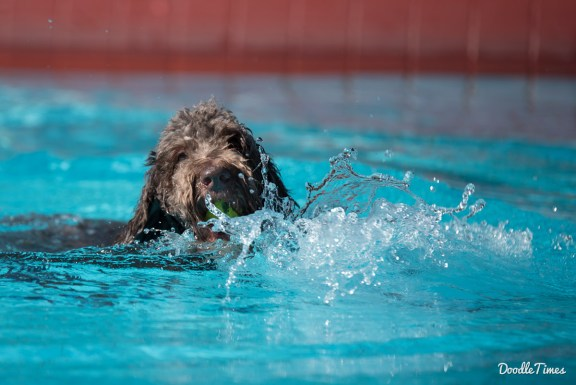 DoodleTimes Hundeschwimmen in Neustadt-7