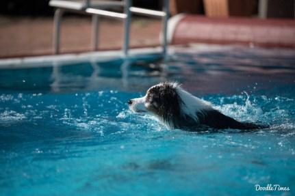 DoodleTimes Hundeschwimmen in Neustadt-9