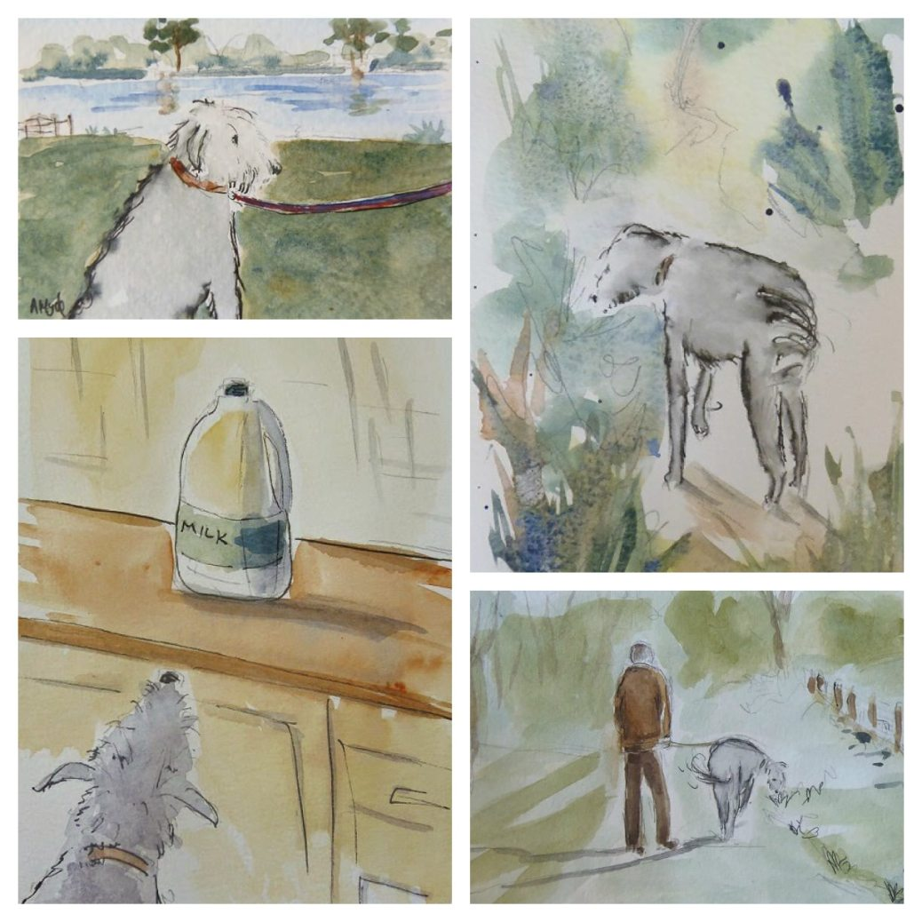 Sketching William the Lurcher by Ann Hyde