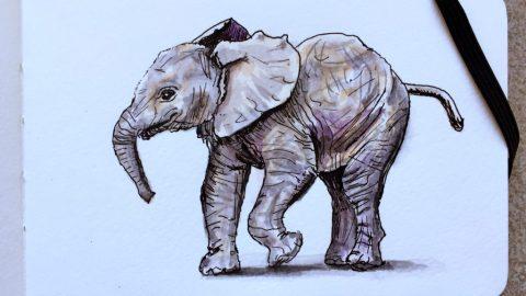Baby Elephant Walk Doodlewash