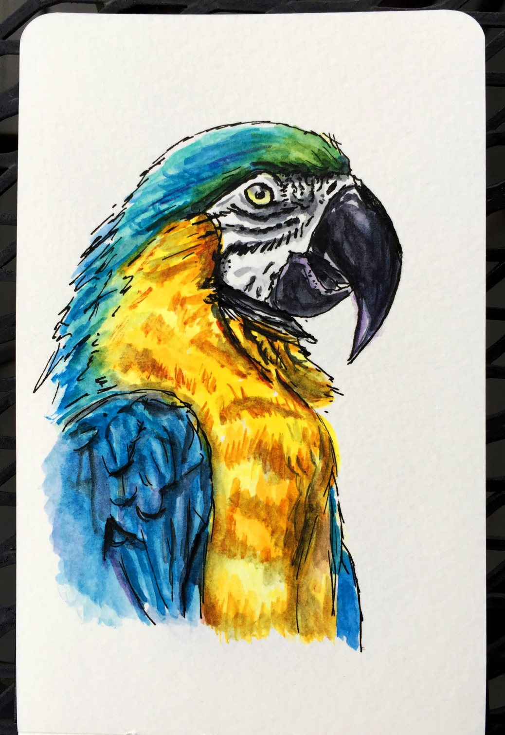 Blue Yellow Macaw by Charlie O'Shields