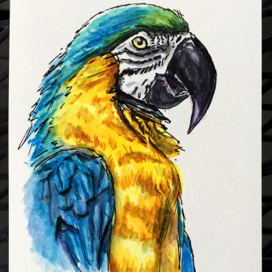 Blue Yellow Macaw by Charlie O'Shields