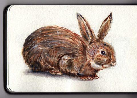 Bunny Rabbit by Charlie O'Shields