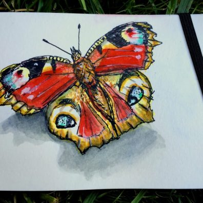Peacock Butterfly by Charlie O'Shields