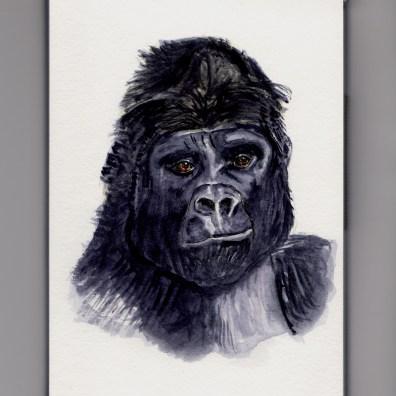 Gorilla Doodlewash by Charlie O'Shields