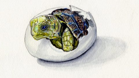 Baby Turtle Doodlewash