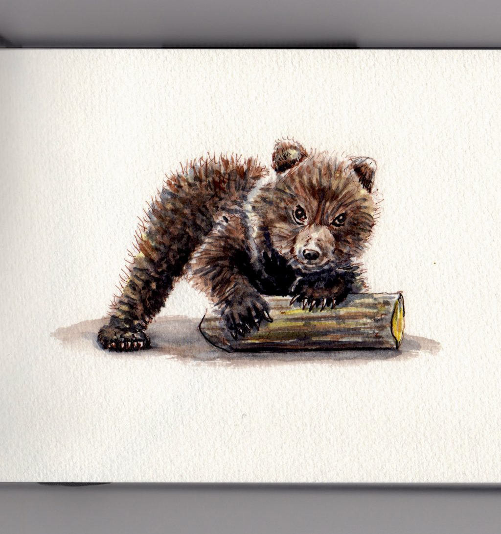 B is for Bear Doodlewash