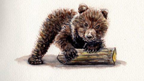B is for Bear Doodlewash